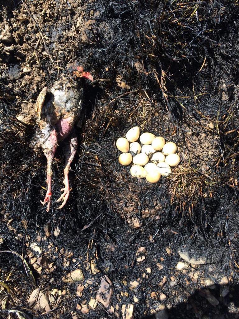 فیلم و عکس از صحنه دردناک آتش سوزی در لواسان