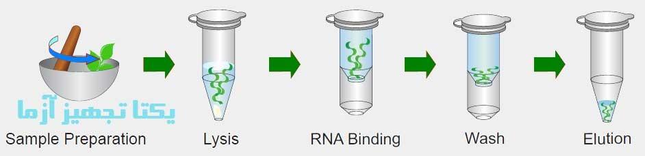 استخراج RNA
