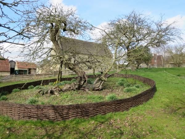 درخت-نیوتن