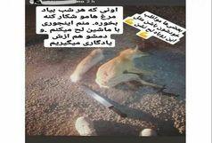 دستگیری ناشر عکس روباه شکار شده در فضای مجازی!