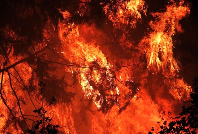 مقصران آتش سوزی در گیلان؛ گرمای هوا یا عامل انسانی؟