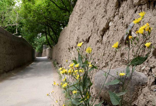باغات و فضای زندگی در محله قدیمی کن، باید بدون قطع درخت حفظ شود