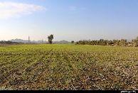 بیش از 500 هکتار از زمین های کشاورزی جاسک به سیستم آبیاری نوین مجهز می شوند