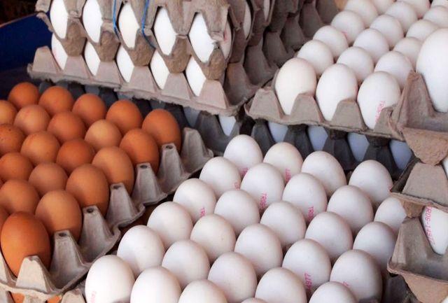 کشف 15 تن دان مرغ قاچاق در رودسر