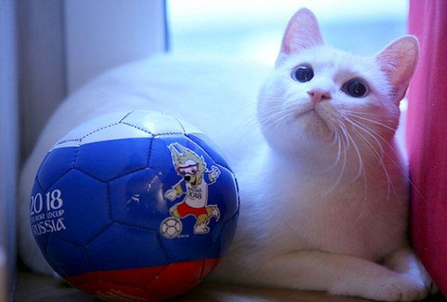 پیش بینی عجیب «گربه پیشگو» درباره جام جهانی