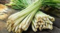 گیاهی برای تقویت سیستم ایمنی بدن