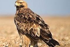 مشاهده 5 گونه جدید پرنده در چهارمحال و بختیاری