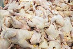 کاهش نرخ گوشت مرغ