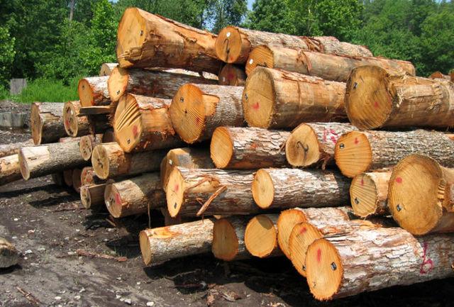 کشف 6 تن چوب جنگلی قاچاق در رودسر