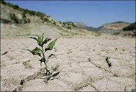 100 درصد مساحت استان درگیر خشکسالی است