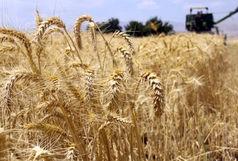 رشد اقتصادی ۸.۸ درصدی بخش کشاورزی در سال ۹۸