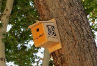 نصب  لانه برای پرندگان بر درختان چهارباغ