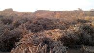 کشف یک و نیم تن چوب قاچاق در دامغان