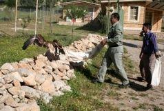 رهاسازی دو بهله پرنده شکاری در خرم آباد