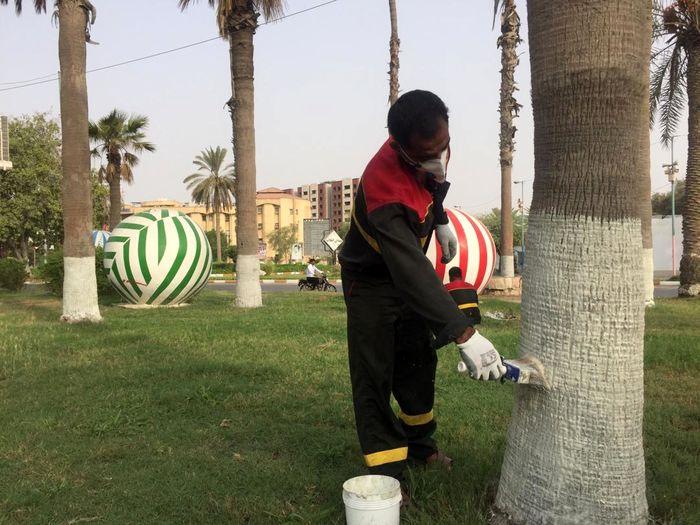 اجرای طرح محافظت از درختان آسیبدیده با استفاده از کائولین