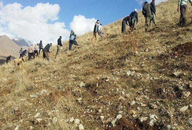 کشت گیاهان دارویی در 60 هکتار از عرصه های ملی سلسله