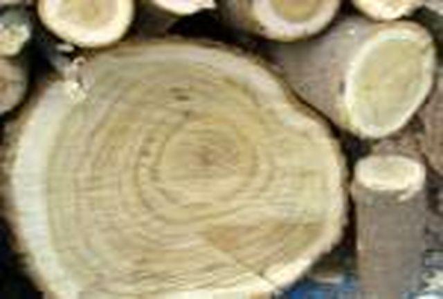کشف بیش از 5 تن چوب قاچاق در گیلان