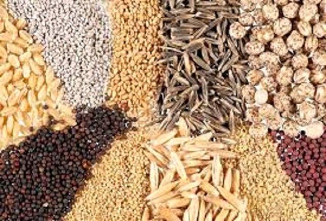 بیش از 2 هزار تن بذور اصلاح شده گندم در زنجان تولید شد