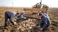 تاکید وزارت جهاد کشاورزی بر حمایت های فنی، اعتباری و تامین منابع آبی مزارع چغندرقند و نیشکر