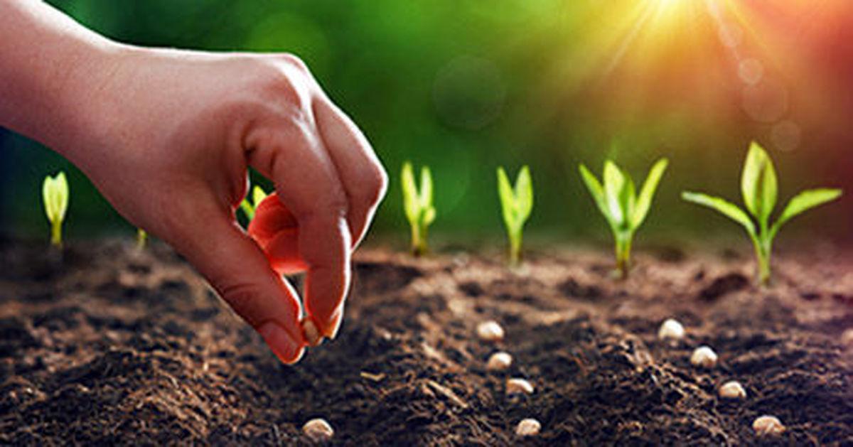 راه اندازی شبکه آموزش کشاورزی کشور «شاک» با شیوع کرونا