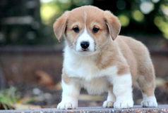 هر سال زندگی سگها معادل چند سال زندگی انسانها است؟