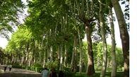 تأثیر وجود درختان در خنک شدن هوا
