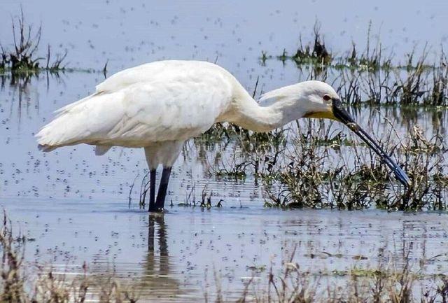 بررسی «جزایر پرندگان» با موضوع پوشش گیاهی در آبادان