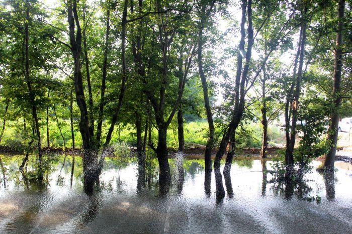 بیش از ۲۰۰ هزار هکتار پوشش درخت جنگلی در عرصههای منابع طبیعی کرمان