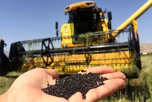 امکان جهش تولید ۱۲ هزار تُنی کلزا در دزفول/توزیع ۱۰ تن بذر بین کشاورزان تا کنون