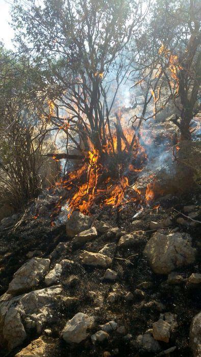 آتش سوزی گسترده در پناهگاه حیات وحش میانکاله