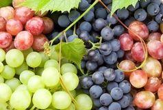 افزایش ۳۵ درصدی تولید انگور در آذربایجان غربی