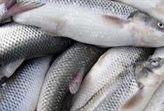 کشف 2 تن ماهی فاسد در آستارا