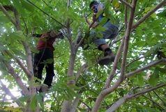 مرگ جوان نهاوندی بر اثر سقوط از درخت گردو