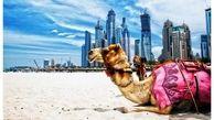 نگاهی به اقتصاد رو به افول امارات