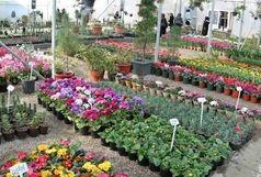 محلات میزبان میز تخصصی گل و گیاه کشور می شود