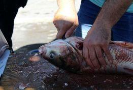 بترسیم از کسانی که از آب گل آلود ماهی خودشان را می گیرند!