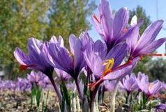 کشف محموله قاچاق زعفران در مهران