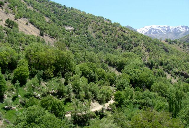 جنگل کاری ۲۰ هزار هکتاری در استان ایلام