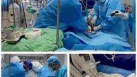 نوزاد مادر مبتلا به کووید۱۹ در بخش مراقبتهای ویژه بیمارستان شهید محمدی متولد شد