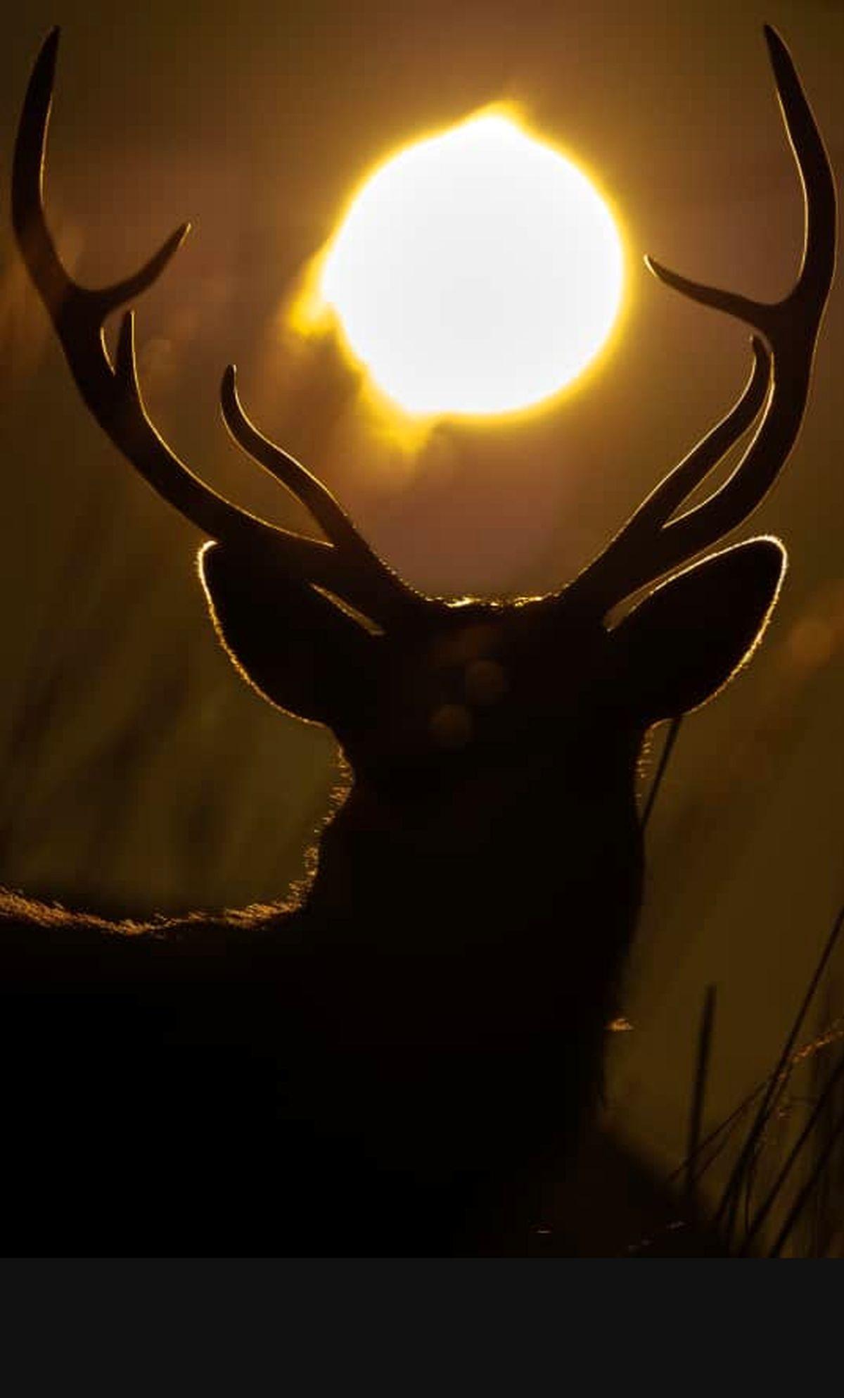 شکارچی که بعد از هشت سال جلوی دوربین آمد/ «مرال کشی» را امشب از شبکه یک ببینید