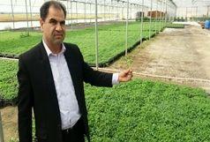 گلخانه تولید نشا در خراسان شمالی راه اندازی شد