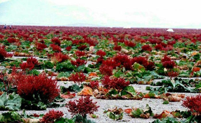 کشف داروهای گیاهی قاچاق در جیرفت