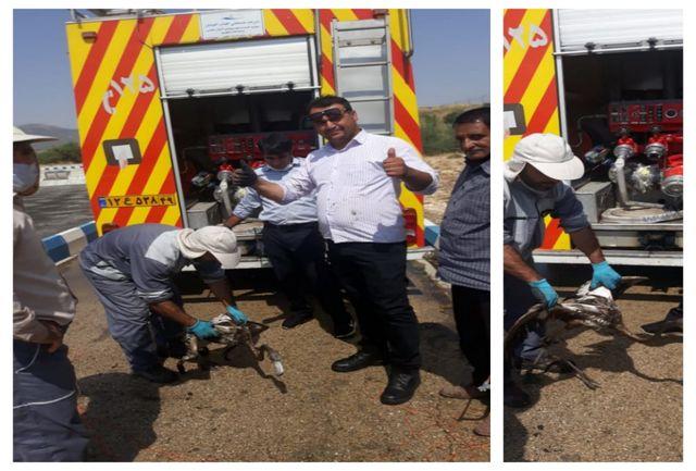 نجات پرنده مهاجر گرفتار شده در فاضلاب شهرستان بویراحمد توسط تیم آتش نشانی