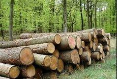 9 تن چوب قاچاق در شهرستان البرز کشف شد