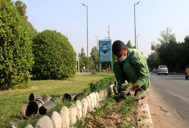 آغاز کاشت ۱.۵ میلیون بذر و نشا گل فصلی در بندرعباس