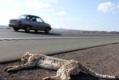 تدابیر محیطزیست برای کاهش اتلاف یوزپلنگ آسیایی