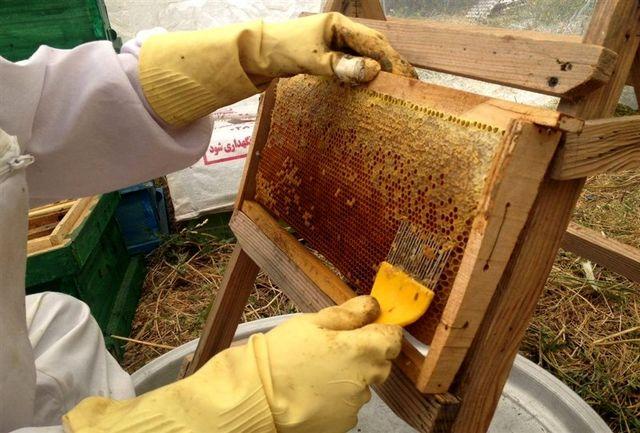 رکورد آذربایجان غربی با تولید بیش از ۲۱ هزار تن عسل