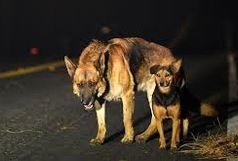 پناهگاه سگهای بلاصاحب به بخش خصوصی واگذار میشود
