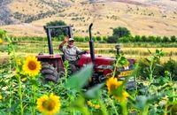 کشت ۸۸ هزار هکتار سویا، کنجد و آفتابگردان روغنی در سال زراعی جاری