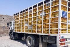کشف محموله مرغ زنده در شهرستان البرز